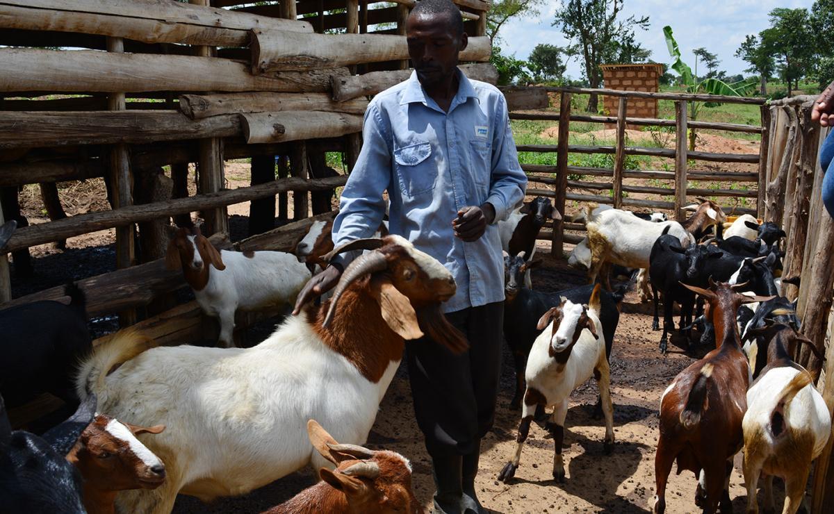 Ziragwira Ngerero Pats A Boer Buck He Got From LWF With Funds PRM
